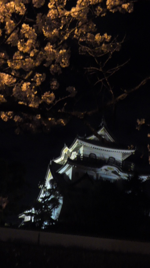 夜桜とお城